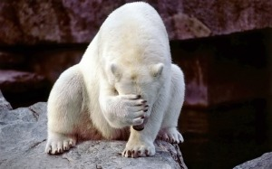 Polar Bear Face Palm